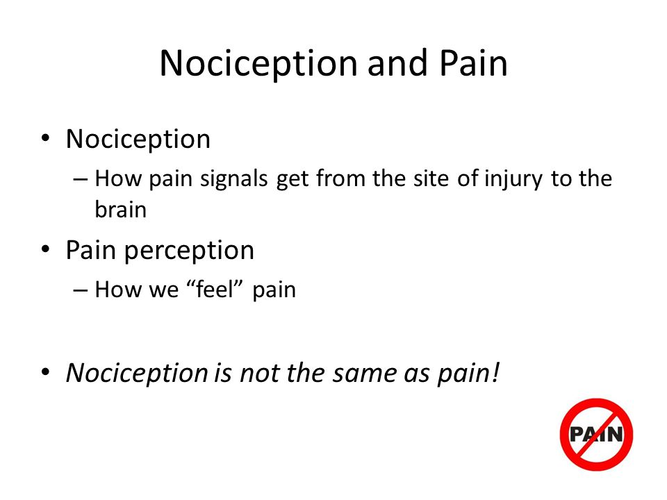 Nociception and Pain Nociception Pain perception