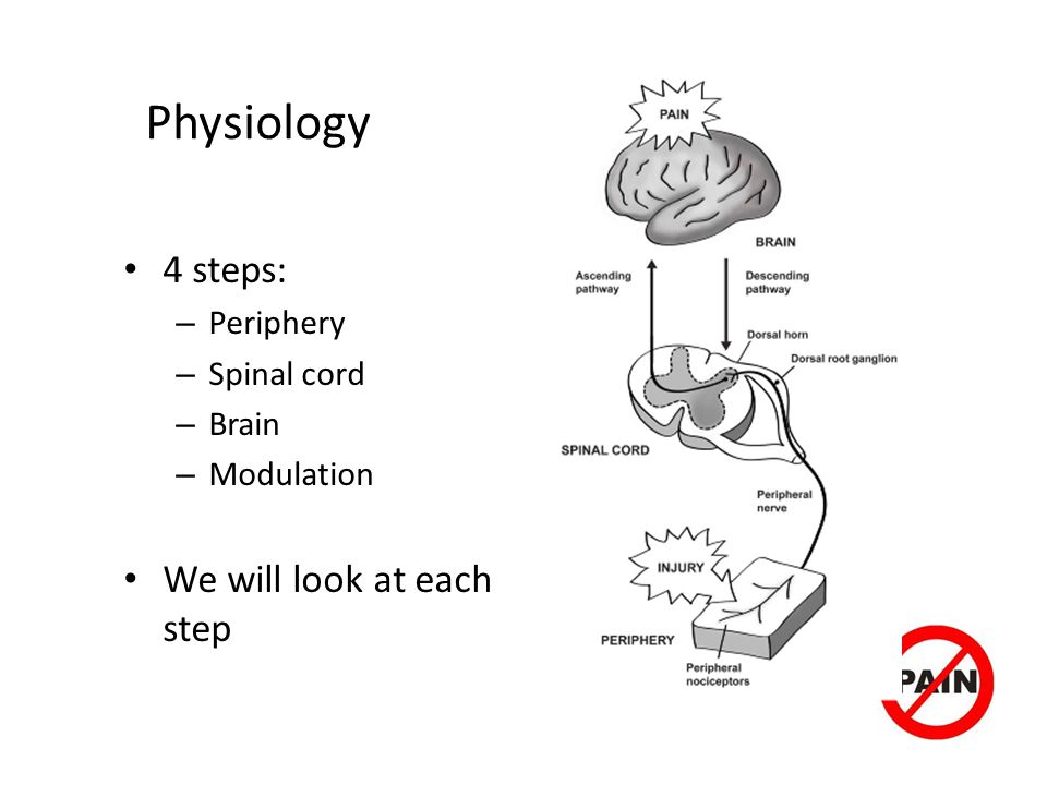 Physiology 4 steps: We will look at each step Periphery Spinal cord