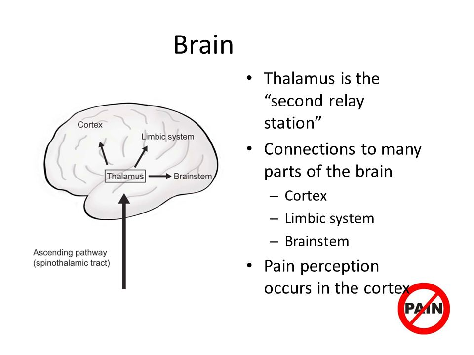 Brain Thalamus is the second relay station