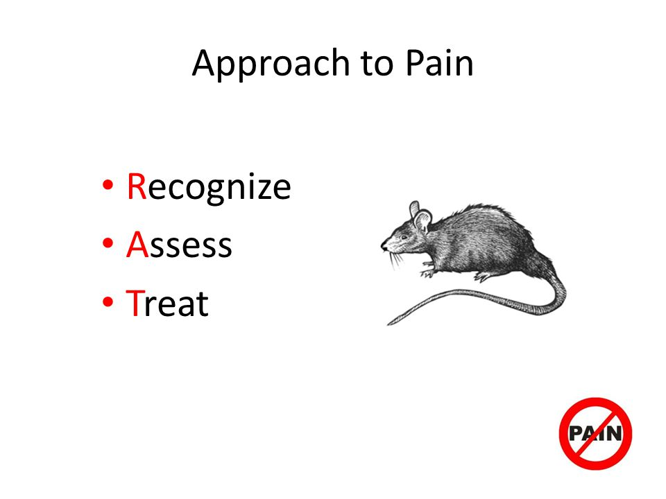 Approach to Pain Recognize Assess Treat
