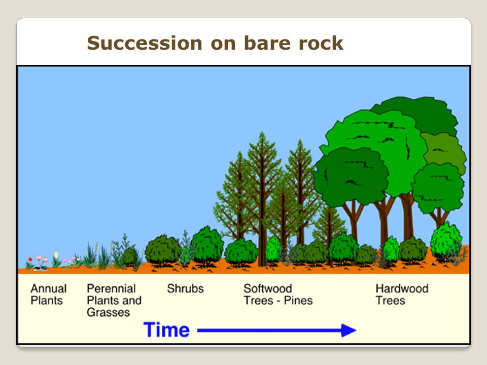 Succession on bare rock