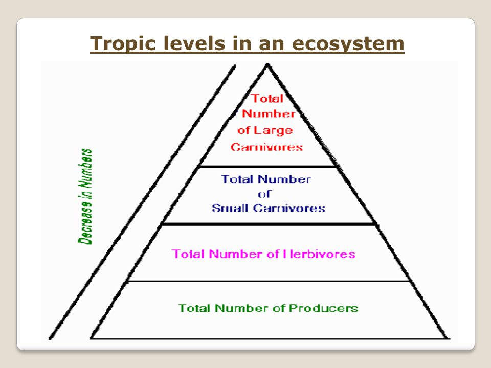 Tropic levels in an ecosystem