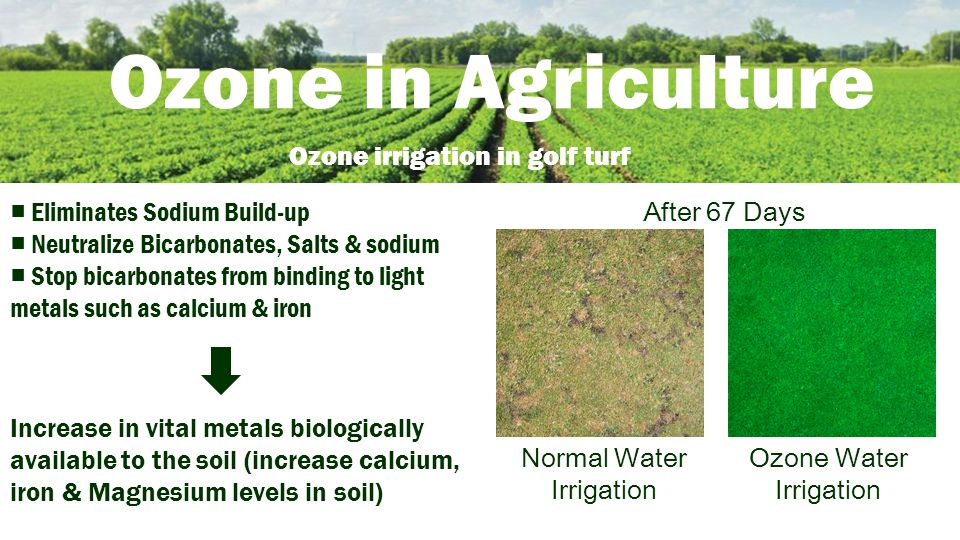 Ozone in Agriculture Ozone irrigation in golf turf