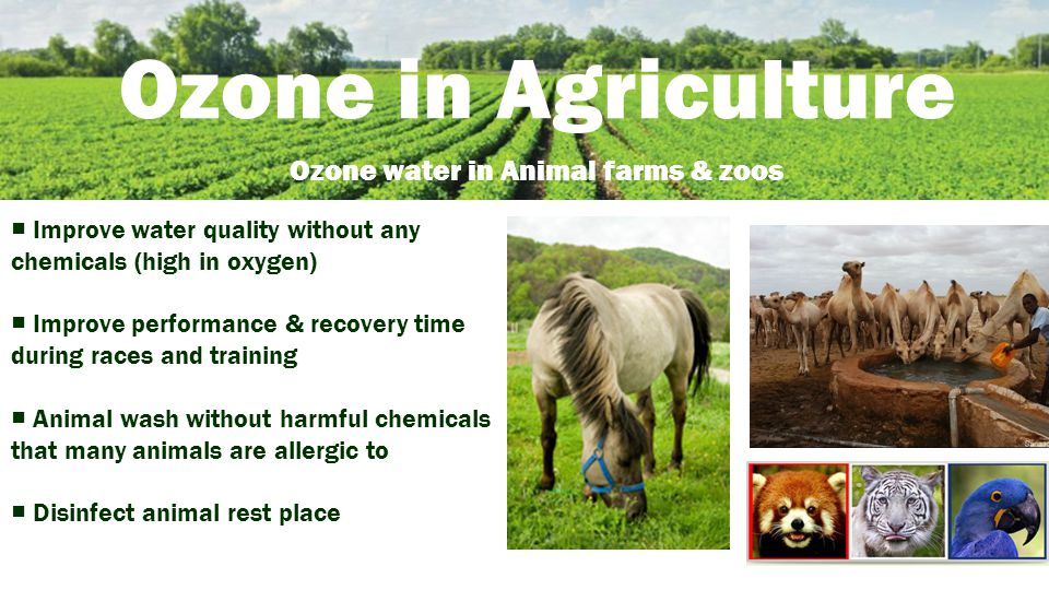 Ozone in Agriculture Ozone water in Animal farms & zoos