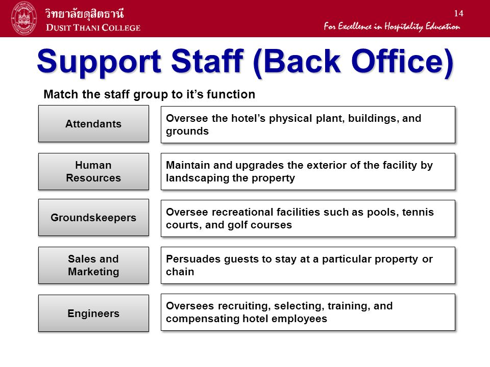Support Staff (Back Office)
