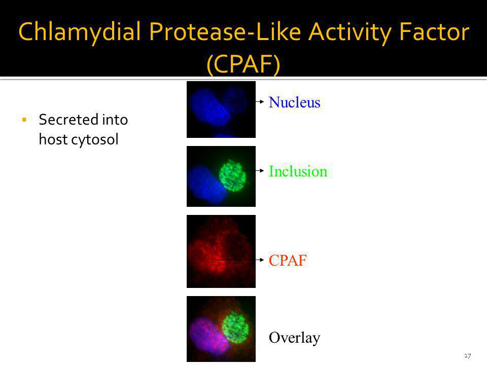 Chlamydial Protease-Like Activity Factor (CPAF)