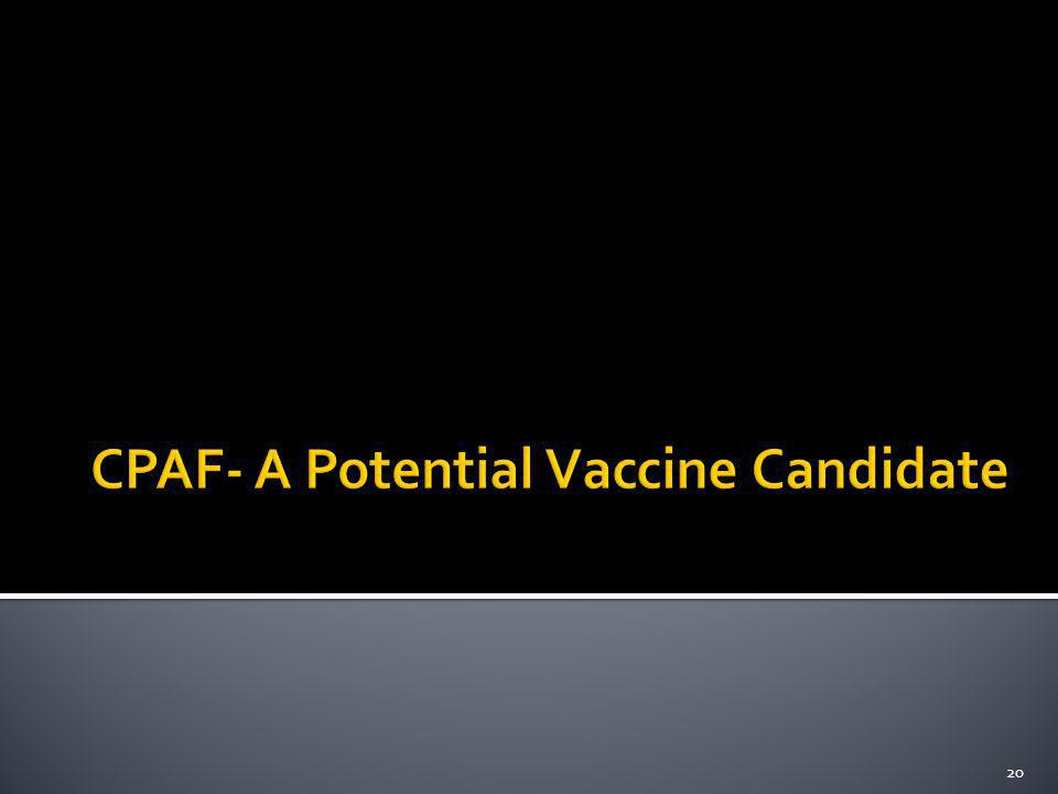 CPAF- A Potential Vaccine Candidate