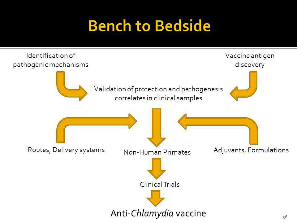 Bench to Bedside Anti-Chlamydia vaccine