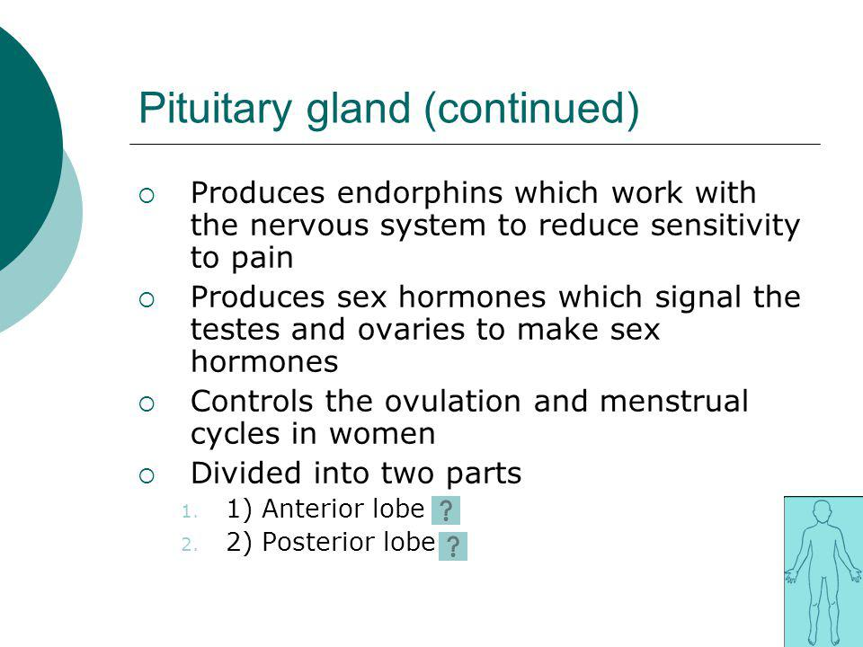 Pituitary gland (continued)