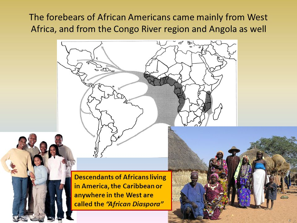The forebears of African Americans came mainly from West Africa, and from the Congo River region and Angola as well