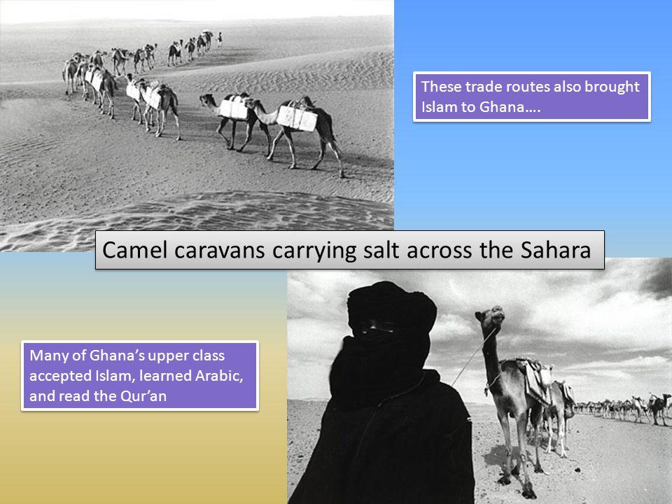 Camel caravans carrying salt across the Sahara