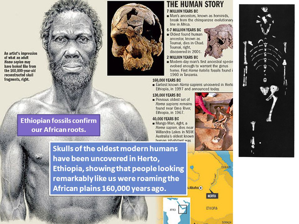 Ethiopian fossils confirm our African roots.