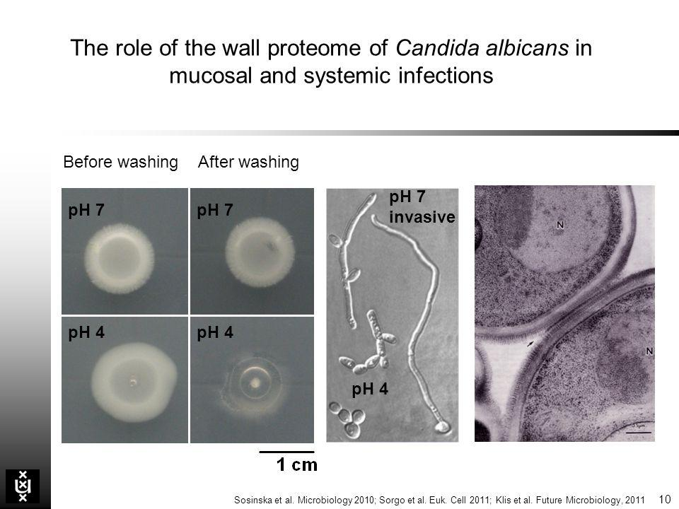 The role of the wall proteome of Candida albicans in mucosal and systemic infections