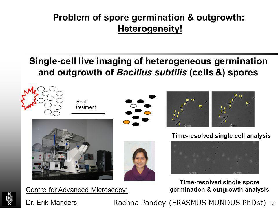 Problem of spore germination & outgrowth: