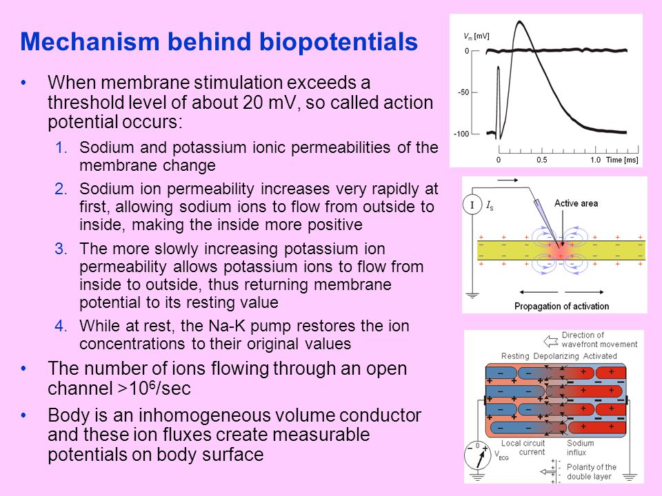 Mechanism behind biopotentials