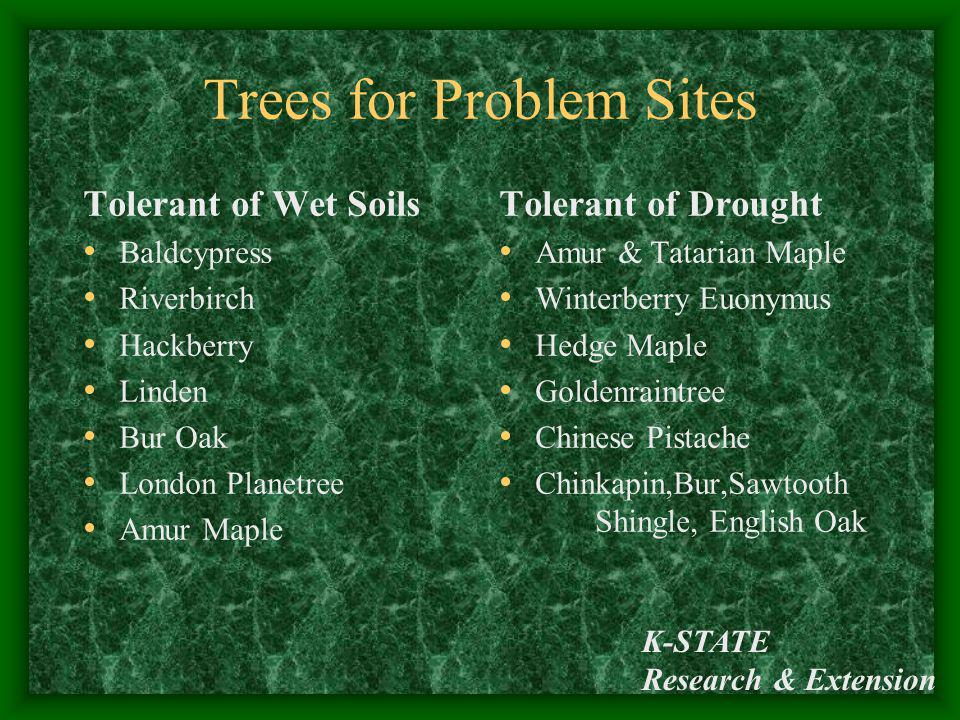 Trees for Problem Sites