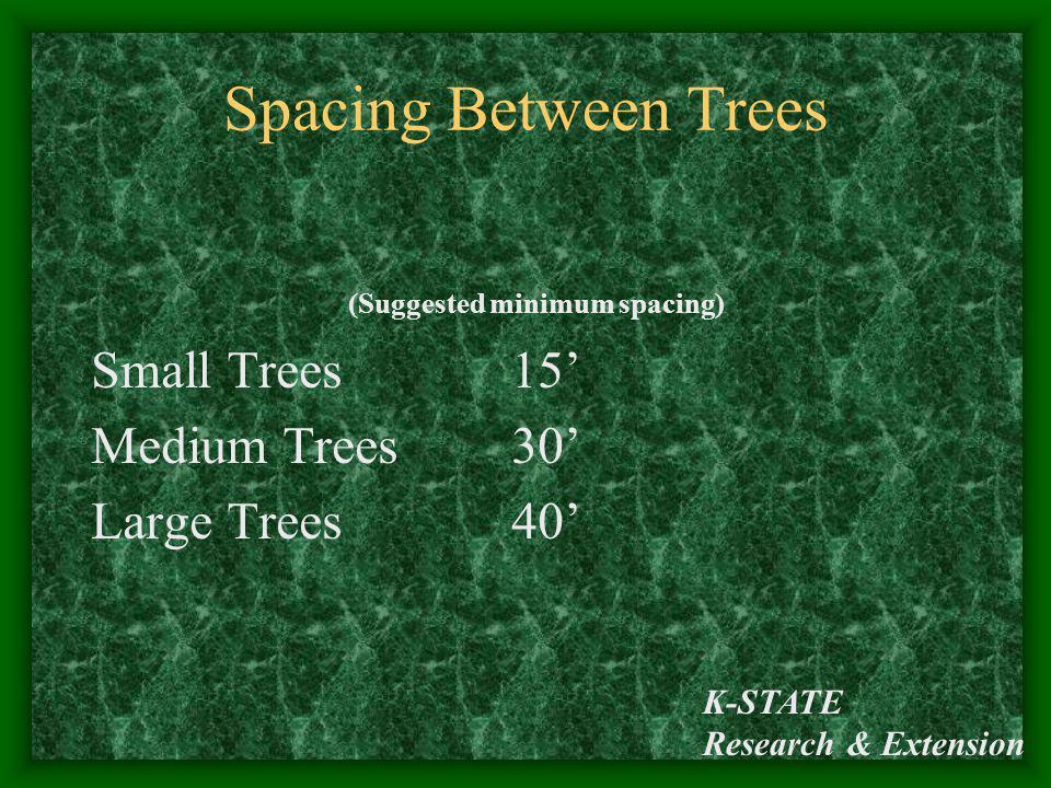 Spacing Between Trees Small Trees 15' Medium Trees 30' Large Trees 40'