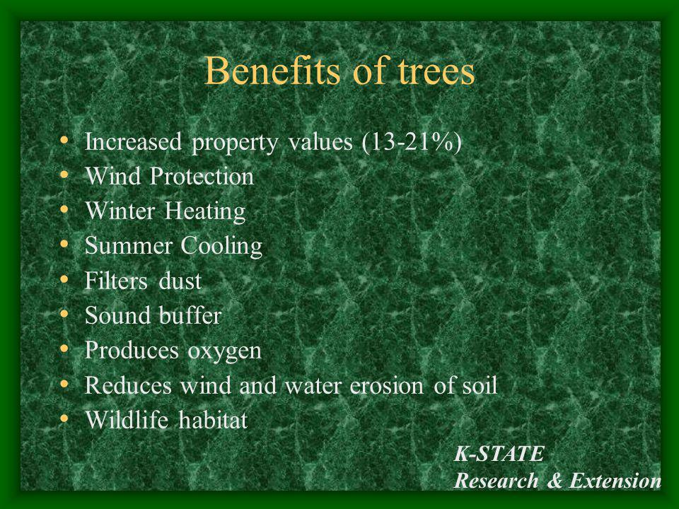 Benefits of trees Increased property values (13-21%) Wind Protection