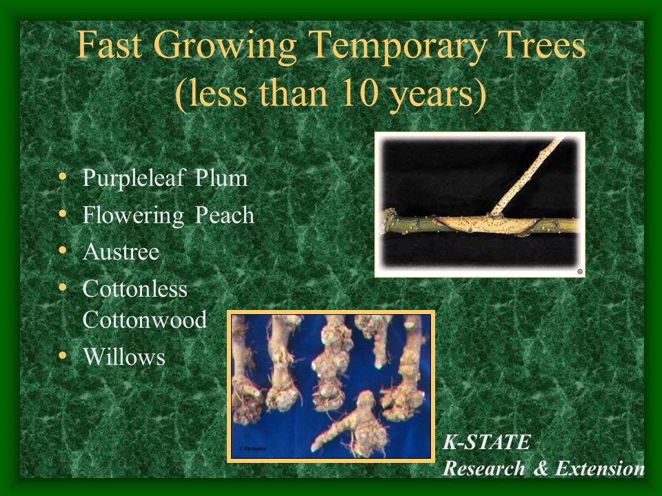 Fast Growing Temporary Trees (less than 10 years)