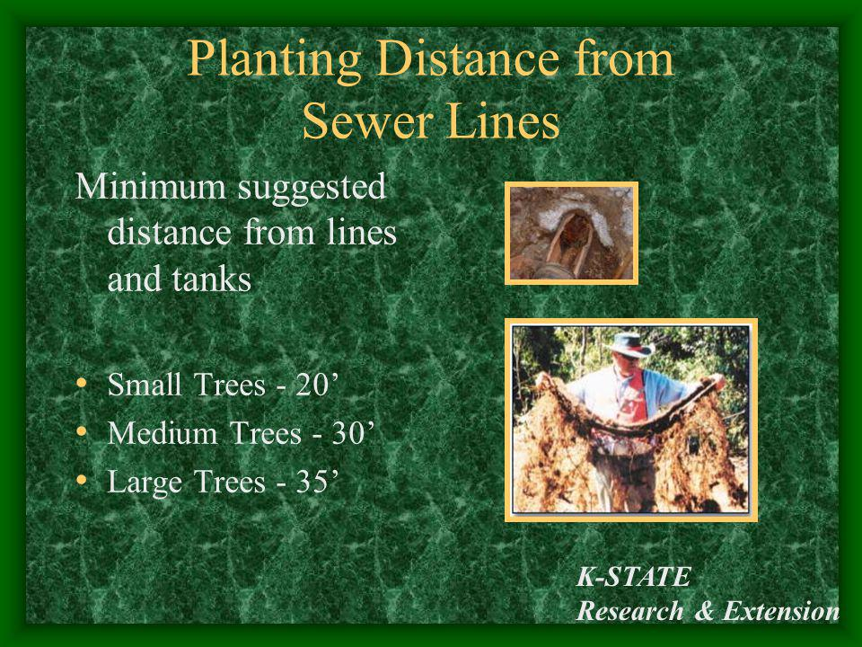 Planting Distance from Sewer Lines