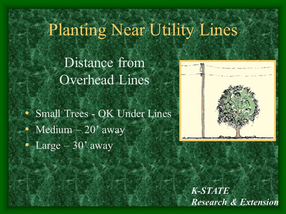 Planting Near Utility Lines