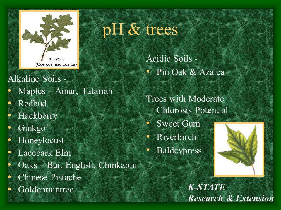 pH & trees Acidic Soils - Pin Oak & Azalea