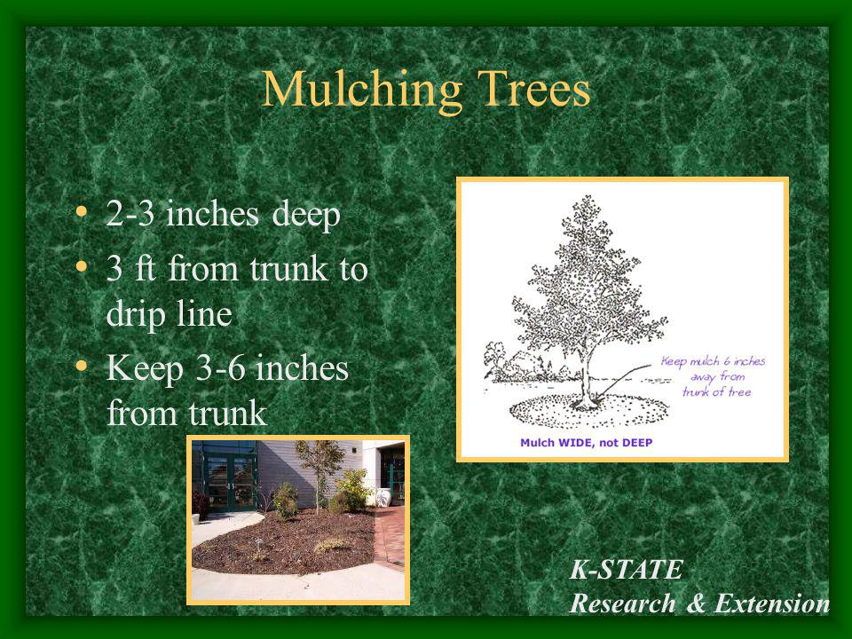 Mulching Trees 2-3 inches deep 3 ft from trunk to drip line