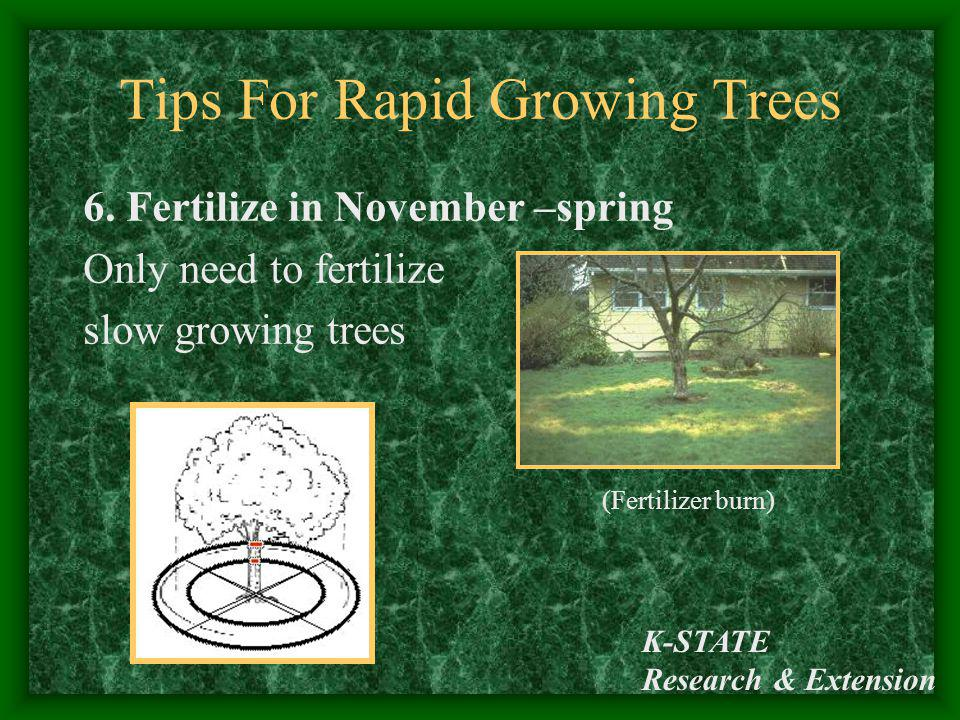 Tips For Rapid Growing Trees