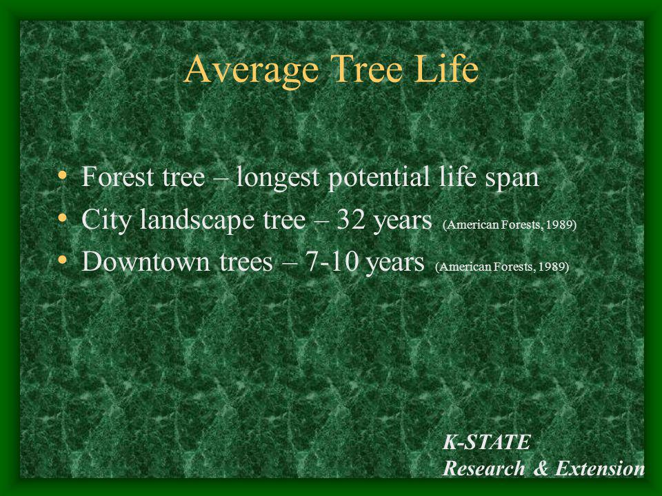 Average Tree Life Forest tree – longest potential life span