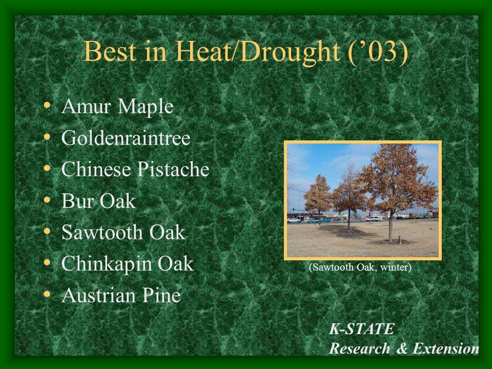Best in Heat/Drought ('03)
