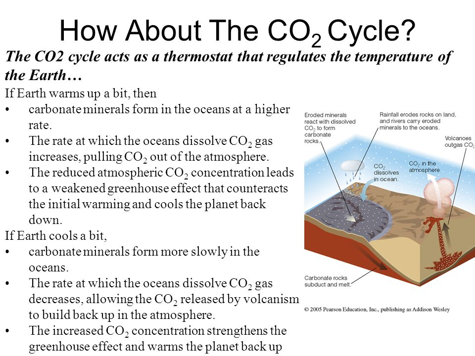 How About The CO2 Cycle The CO2 cycle acts as a thermostat that regulates the temperature of the Earth…