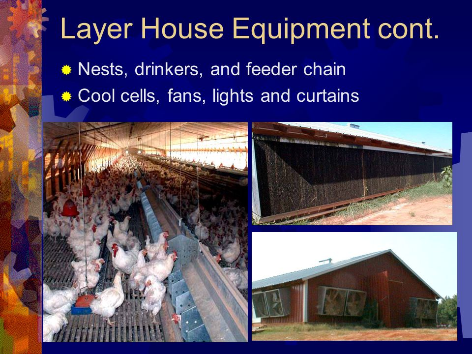 Layer House Equipment cont.