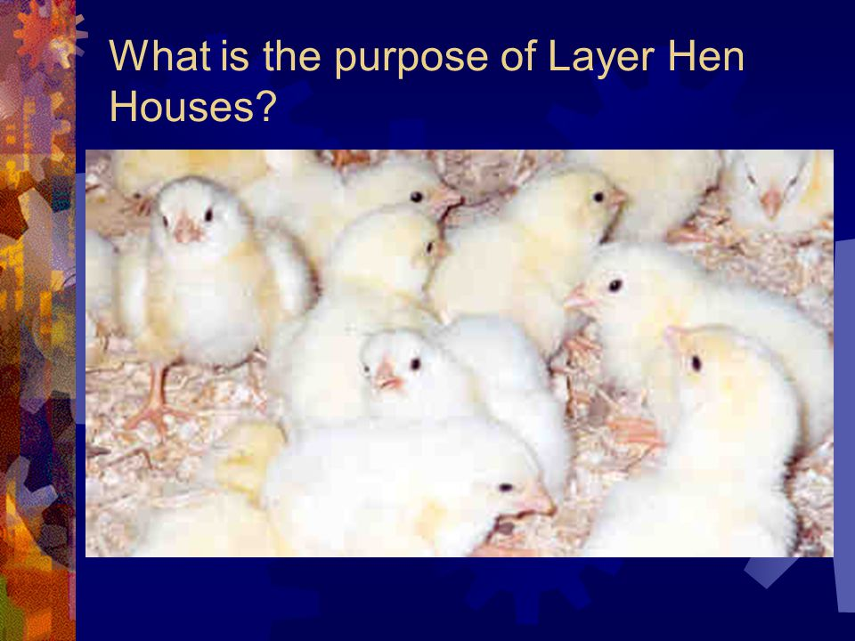 What is the purpose of Layer Hen Houses