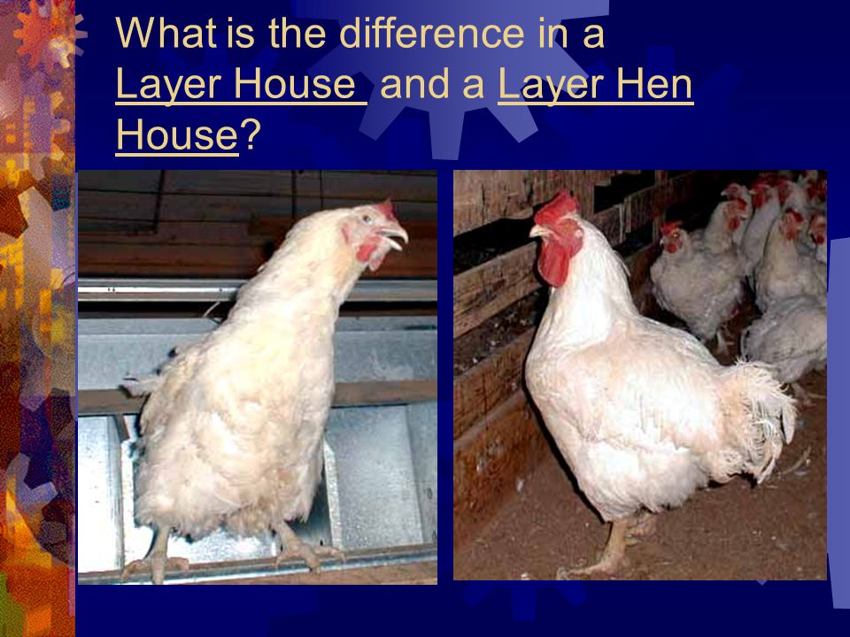 What is the difference in a Layer House and a Layer Hen House