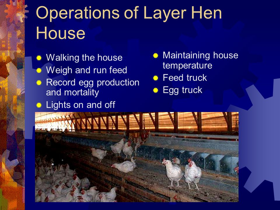 Operations of Layer Hen House