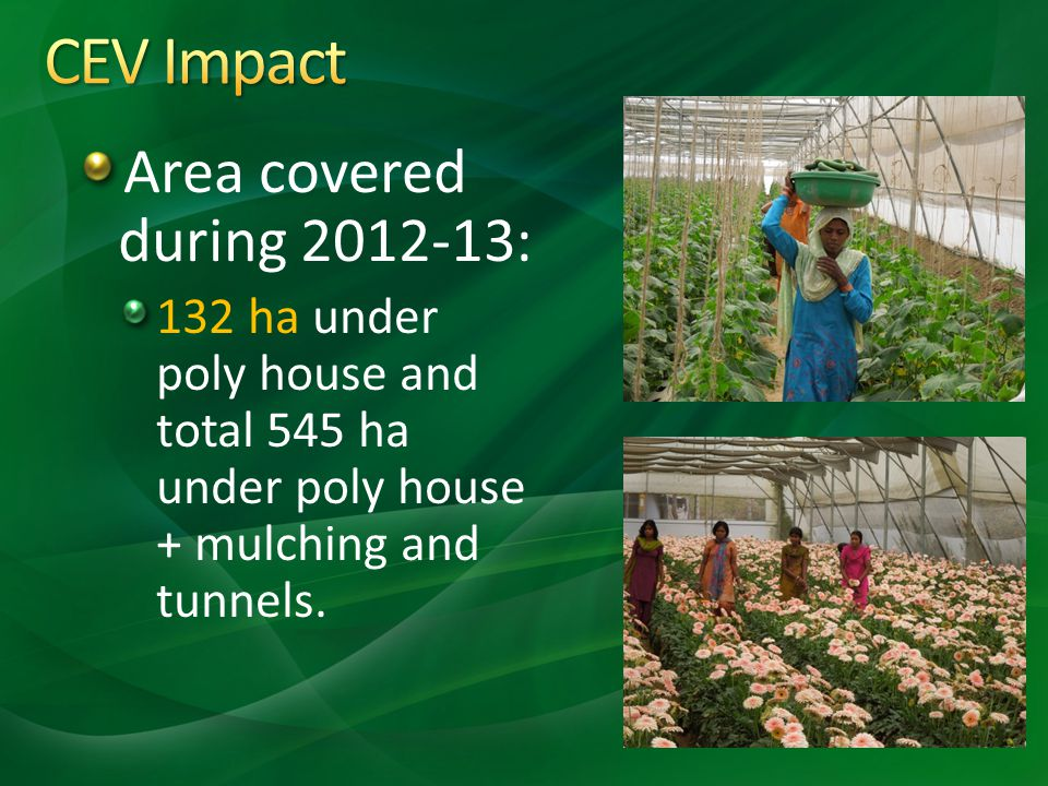 CEV Impact Area covered during 2012-13: