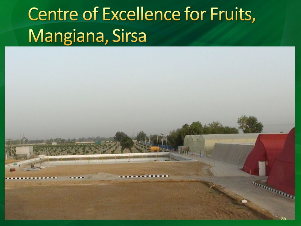 Centre of Excellence for Fruits, Mangiana, Sirsa