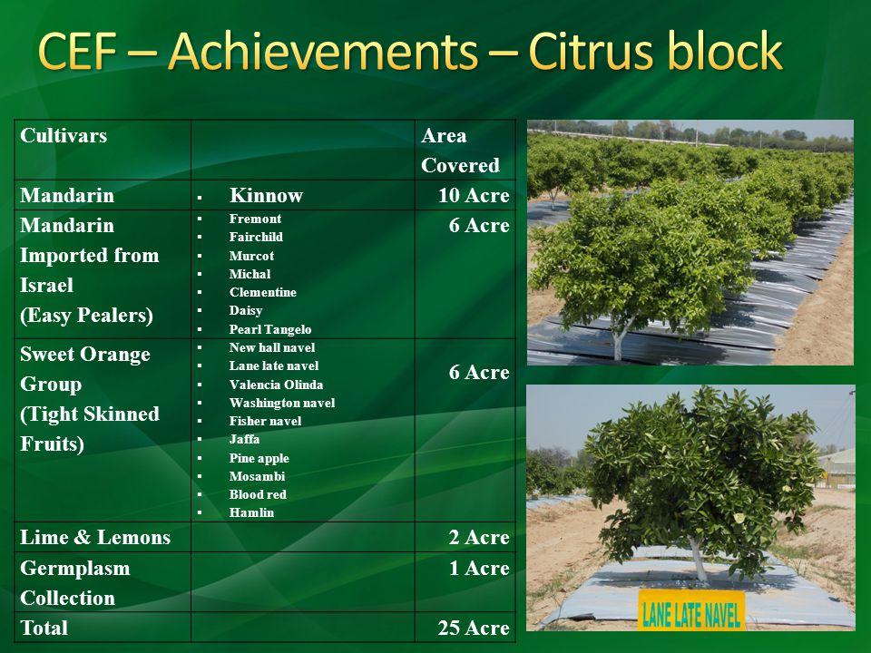 CEF – Achievements – Citrus block