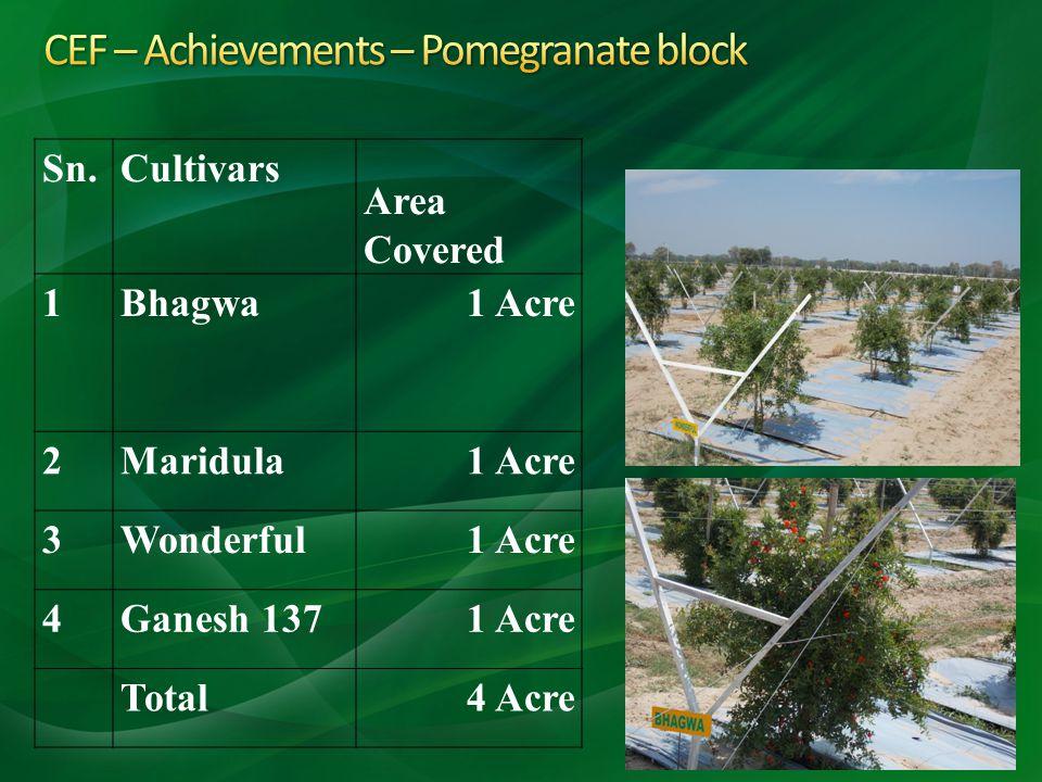 CEF – Achievements – Pomegranate block