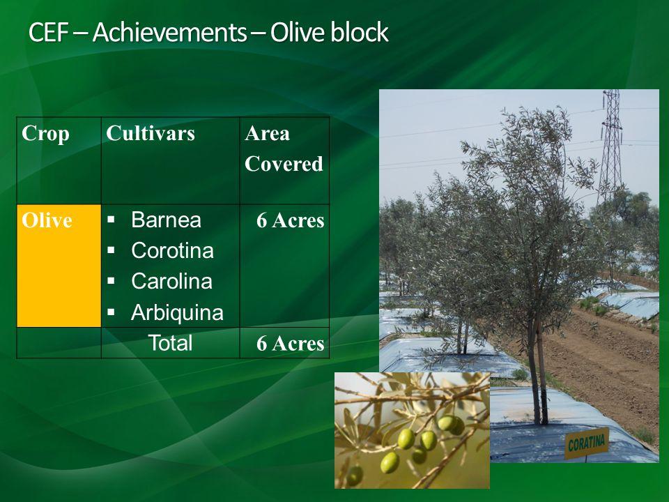 CEF – Achievements – Olive block