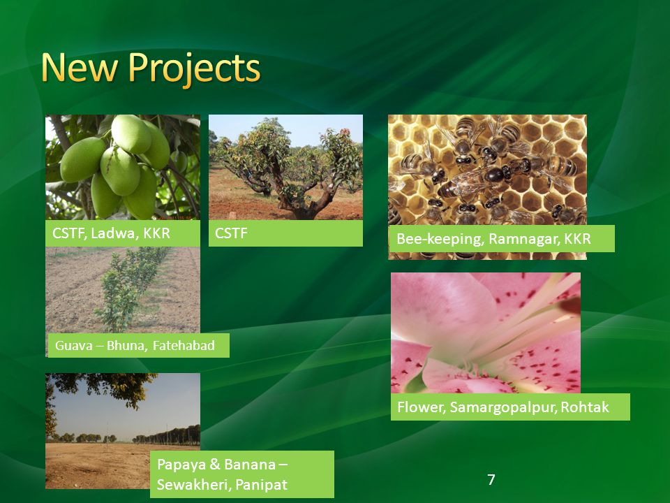 New Projects CSTF, Ladwa, KKR CSTF Bee-keeping, Ramnagar, KKR