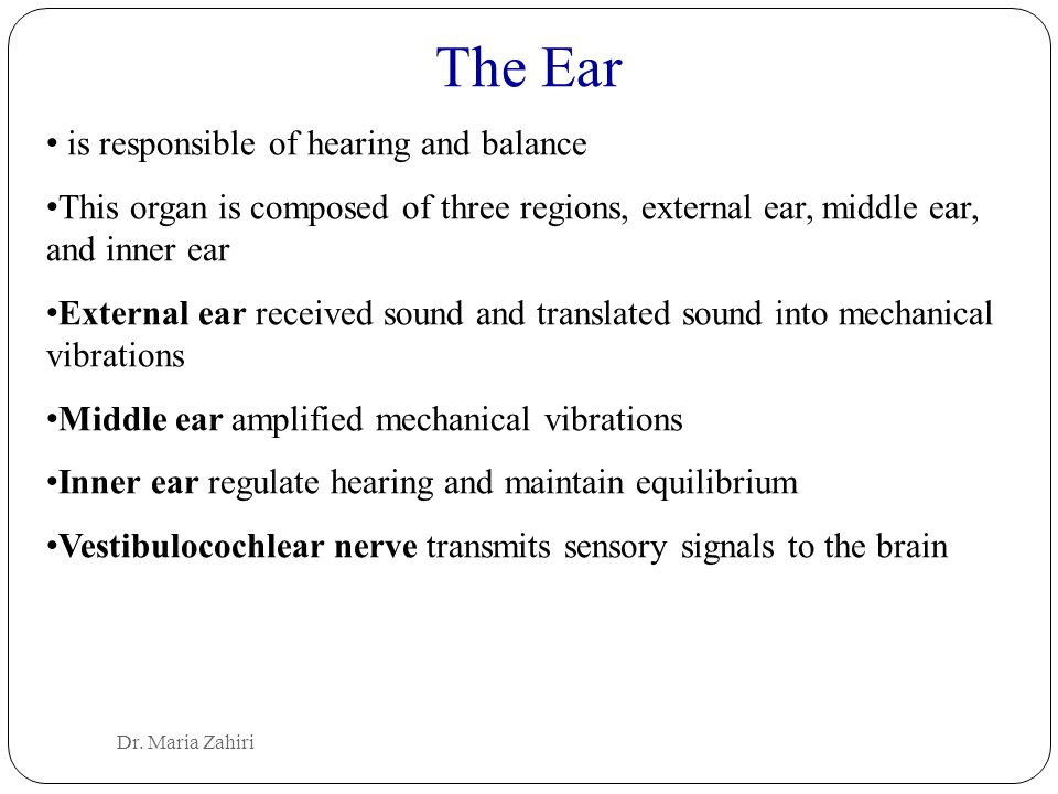 The Ear is responsible of hearing and balance
