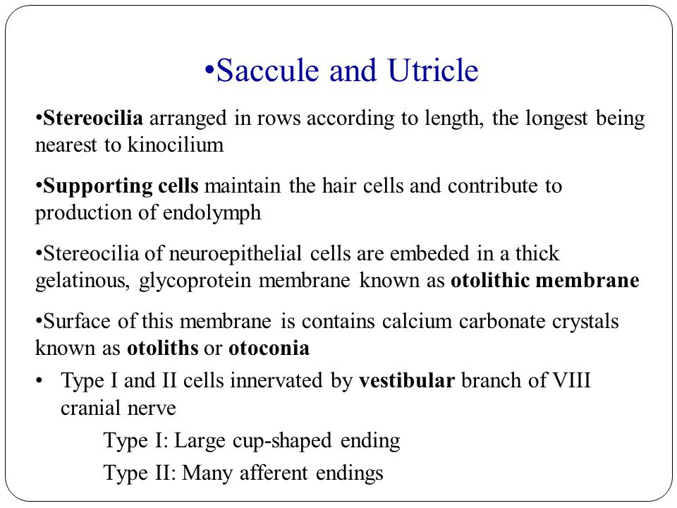 Saccule and Utricle Stereocilia arranged in rows according to length, the longest being nearest to kinocilium.
