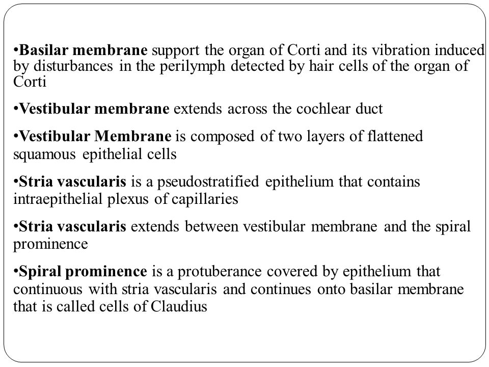Basilar membrane support the organ of Corti and its vibration induced by disturbances in the perilymph detected by hair cells of the organ of Corti