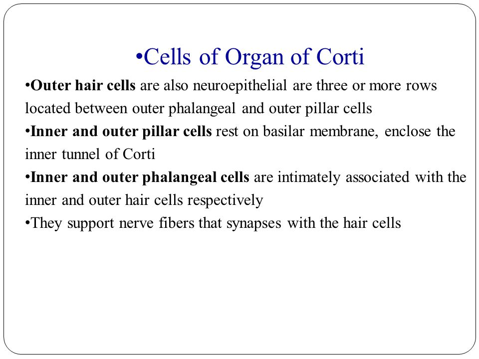 Cells of Organ of Corti Outer hair cells are also neuroepithelial are three or more rows located between outer phalangeal and outer pillar cells.