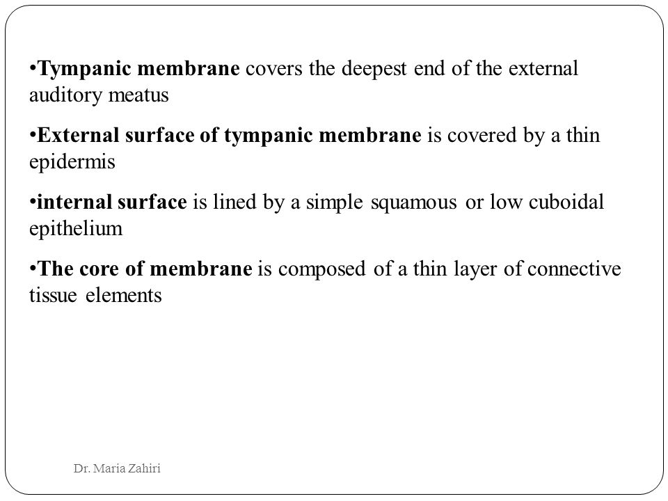 External surface of tympanic membrane is covered by a thin epidermis