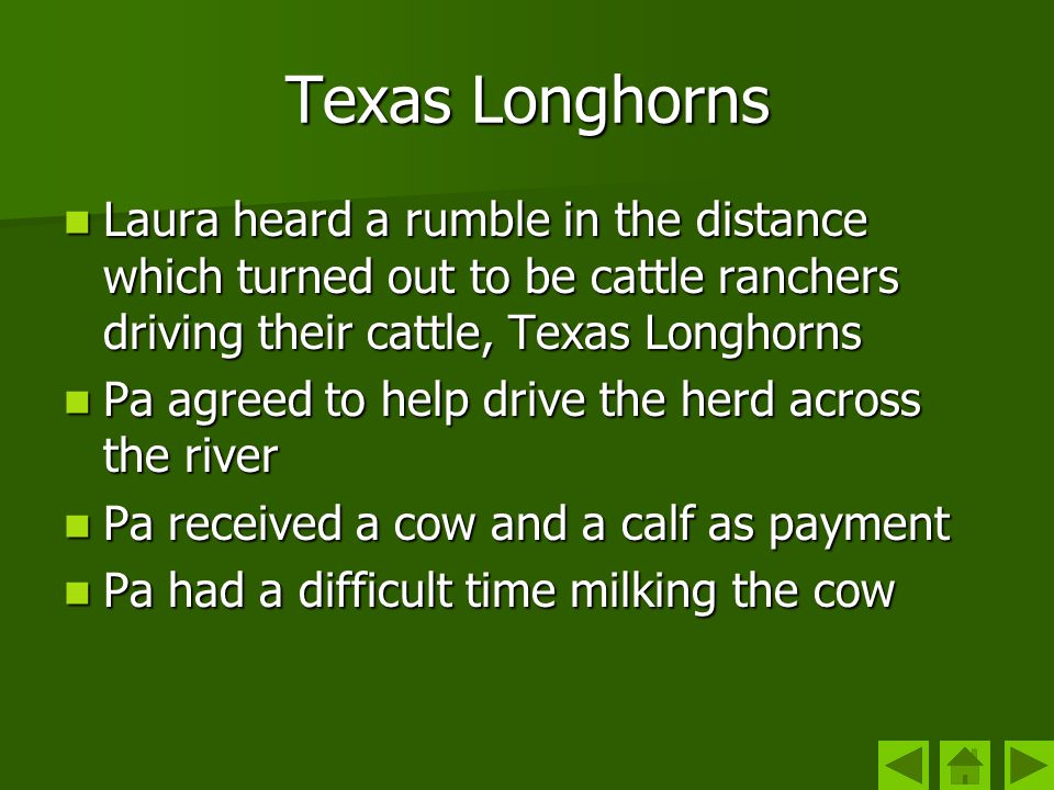 Texas Longhorns Laura heard a rumble in the distance which turned out to be cattle ranchers driving their cattle, Texas Longhorns.
