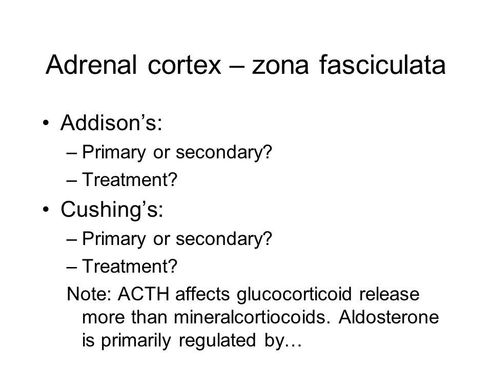 Adrenal cortex – zona fasciculata