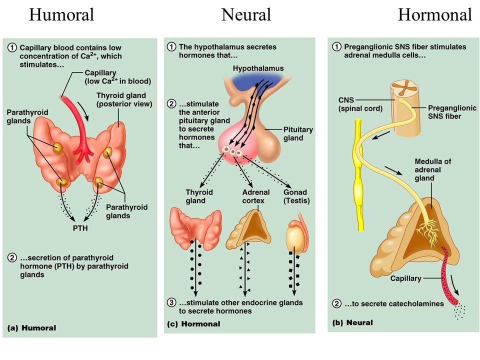 Humoral Neural Hormonal