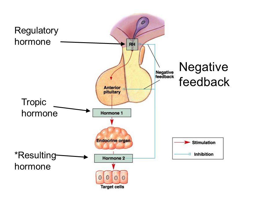 Regulatory hormone Negative feedback Tropic hormone *Resulting hormone